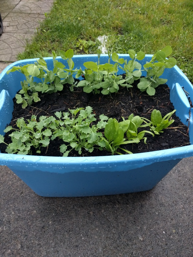 CLEcitymom Raised Bed Garden